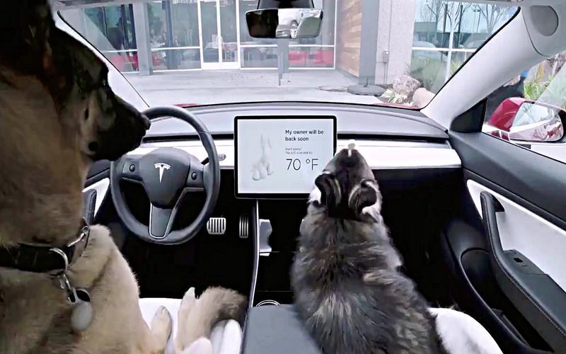 Dog-friendly climate control