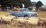 Cropley on cars: Enzo? I'd rather have a Holden ute…