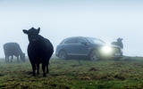 Bentley Bentayga Diesel and cow