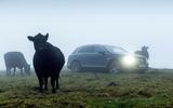 Bentley Bentayga Diesel and cow