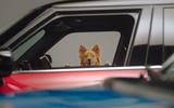 mini dog 04