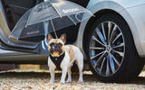 Skoda Superb dog umbrella