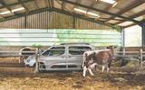 Citroen Berlingo 2019 long-term review - cowshed side