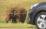 Kia e-Niro 2019 long-term review - elephant