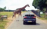 Kia e-Niro 2019 long-term review - giraffe