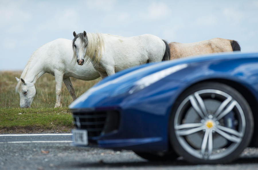 Ferrari horse photo