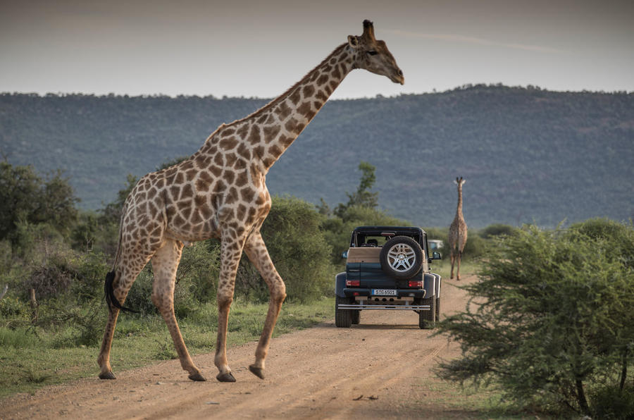 Mercedes-Maybach G650 Landaulet with a giraffe