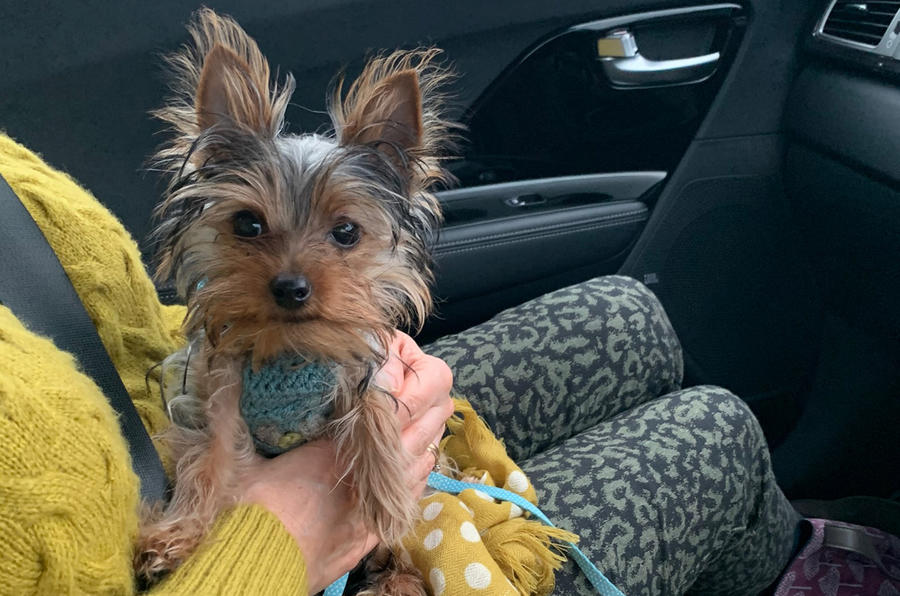 Kia e-Niro to Edinburgh - dog