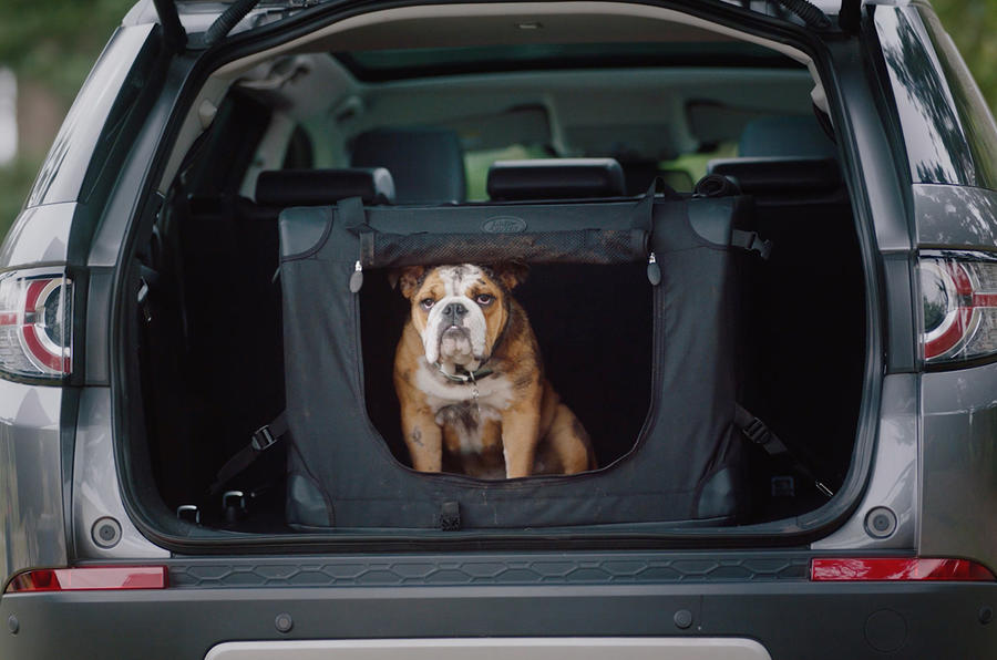 Land Rover reveals dog-friendly transport packs
