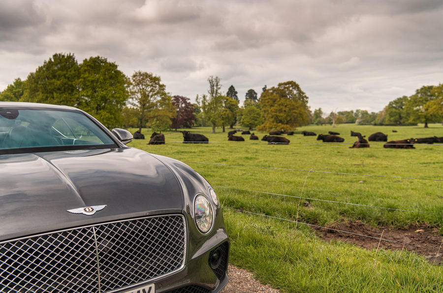 Bentley Continental GT 2019 long-term review - cows